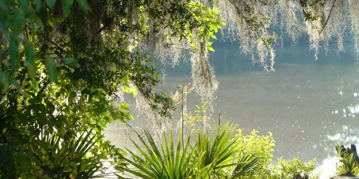 Heart of Louisiana: Palmetto Island State Park