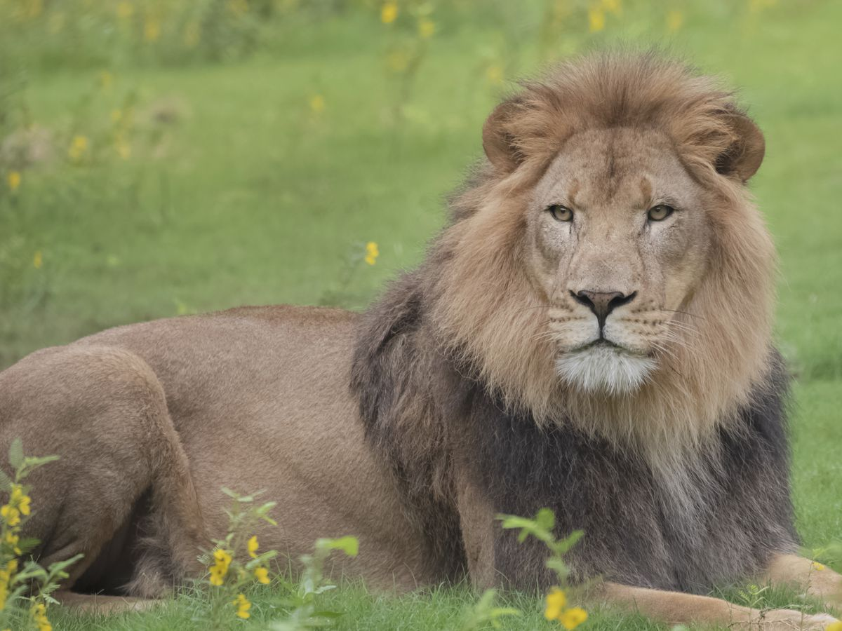 A look inside the Audubon Zoo, devoid of visitors during coronavirus shutdown