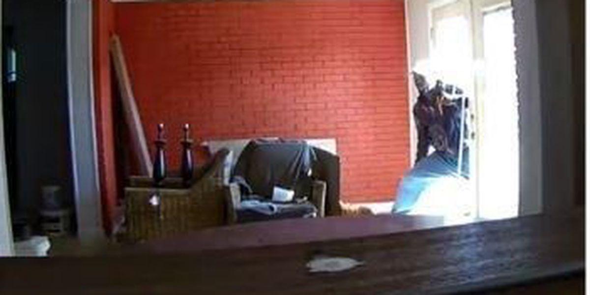 VIDEO: Burglars kick down glass door, steal televisions, NOPD says