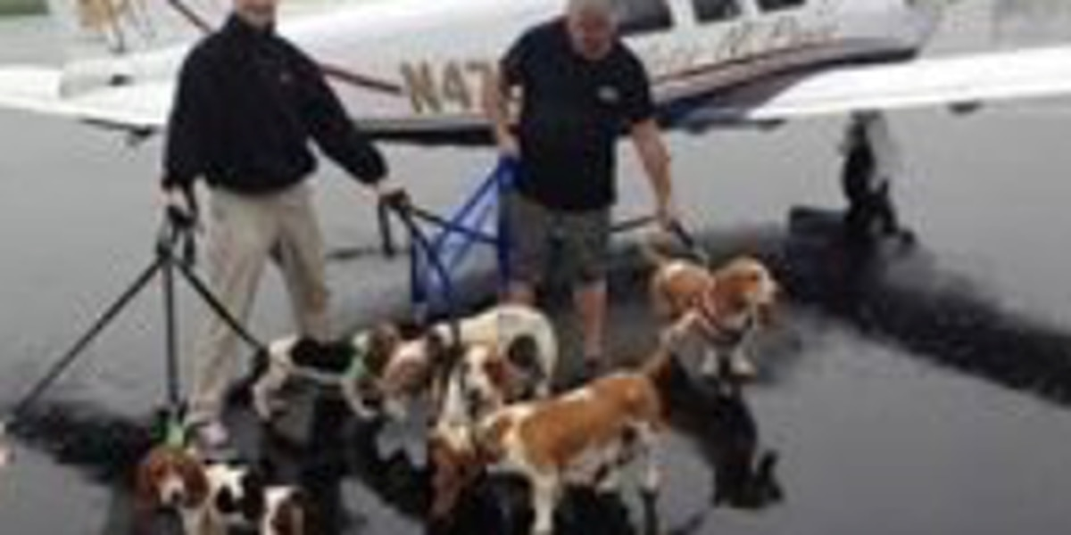 Louisiana shelters welcome Hurricane Harvey Pets