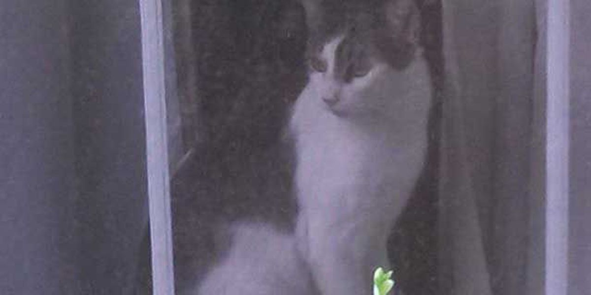 Coroner to examine mutilated cat's body in search for answers