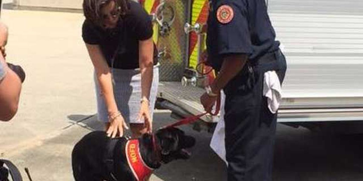 Meet Dakota: The furry addition to the New Orleans Fire Department