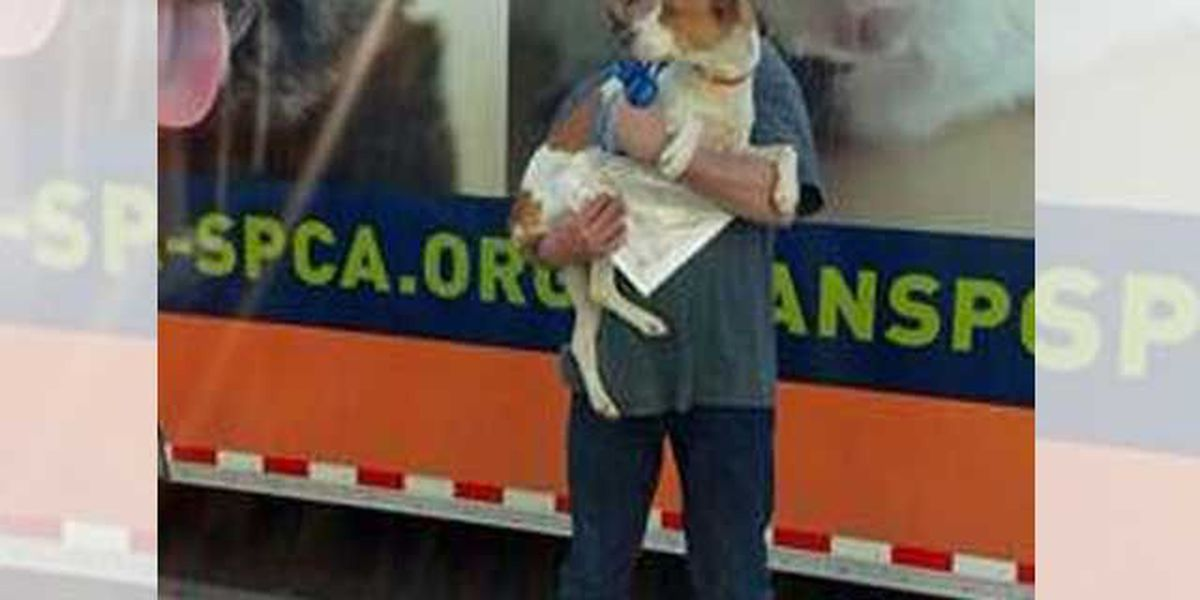 New Orleans murder victim's dog reunites with family in Missouri