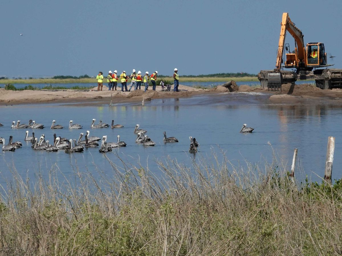 BP spill fines pay for the restoration of Queen Bess Island, a vital pelican nesting site