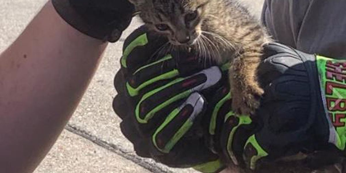 St. Tammany firefighters rescue kitten wedged inside vehicle fender