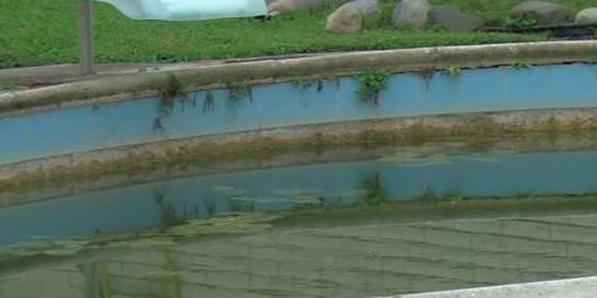 FOX 8 Defenders: Council members push for stronger enforcement regarding blighted pools