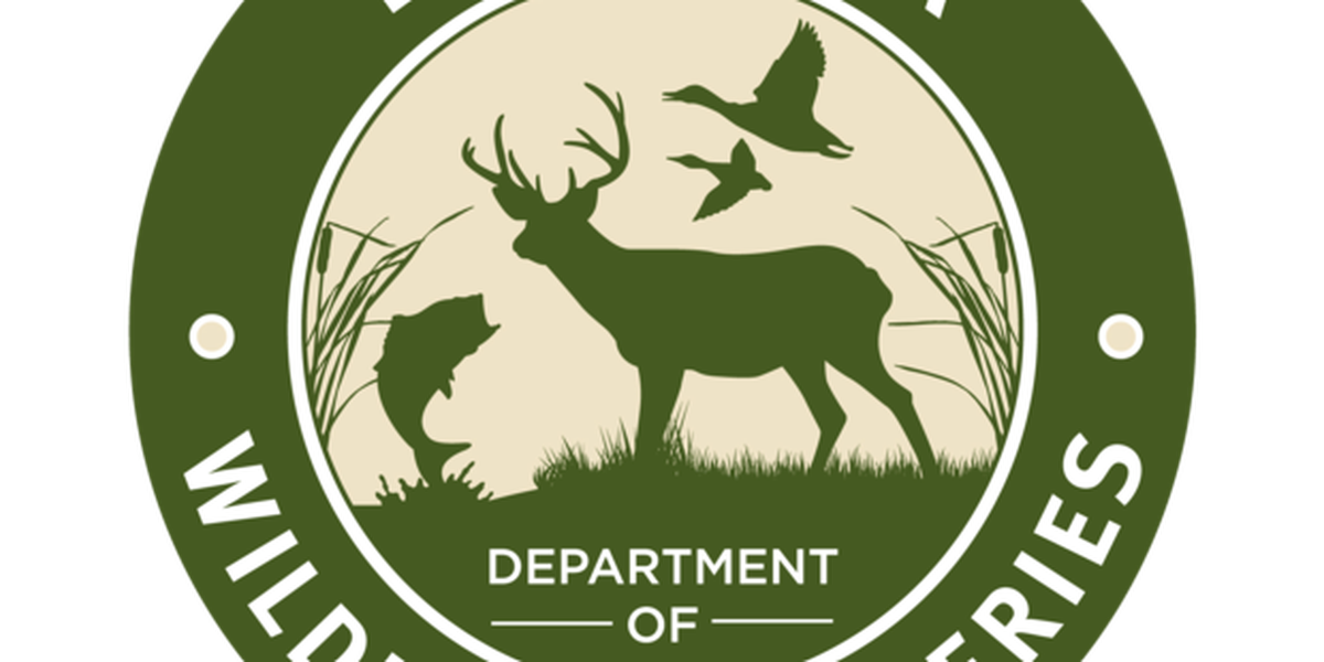 Flooding leads to shutdown of portions of Maurepas Swamp and Joyce Wildlife Management Areas