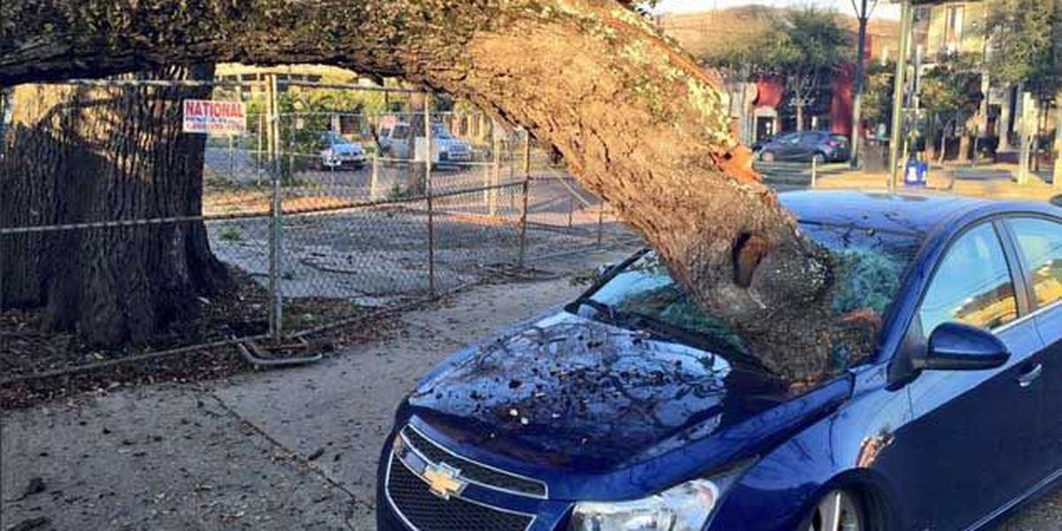 Massive tree limb crashes through honeymooners' car windshield