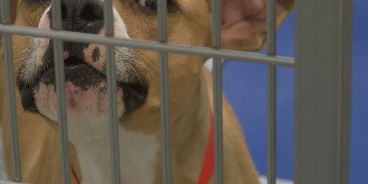 First reported case of dog testing positive for virus that causes COVID-19 recorded in Louisiana