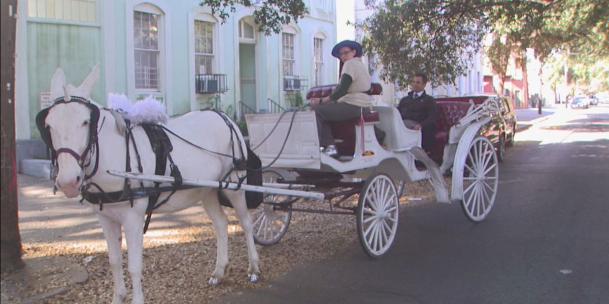 Where Y'at Adaline: A carriage ride around town