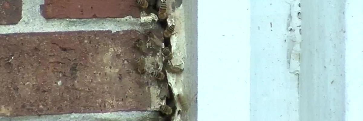 Westwego residents concerned over apparent bee infestation
