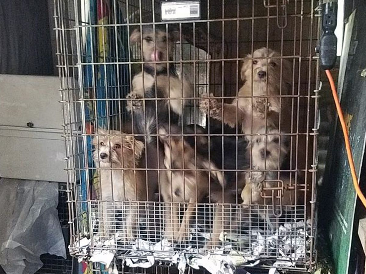 Humane Society of Louisiana rescues 30 animals from filthy living conditions