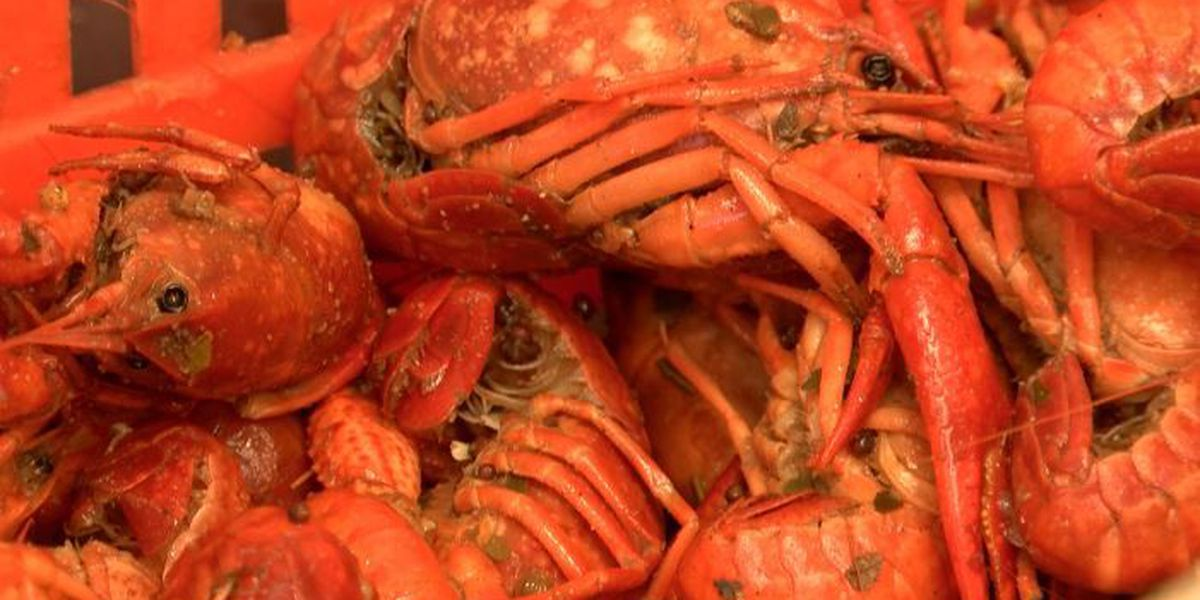 As temperatures warm up, crawfish grow and prices drop