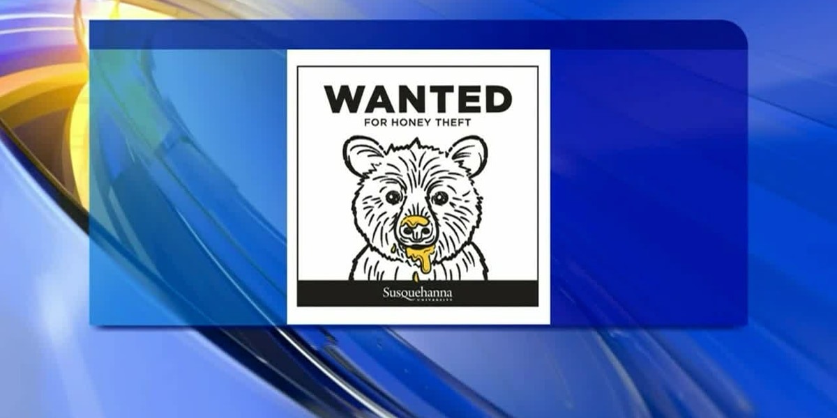 Bear 'wanted' for honey theft