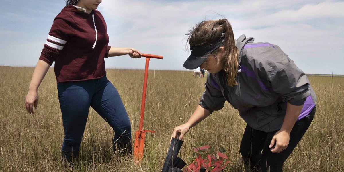 Chalmette High students sow seeds of hope along battered St. Bernard Parish coastline