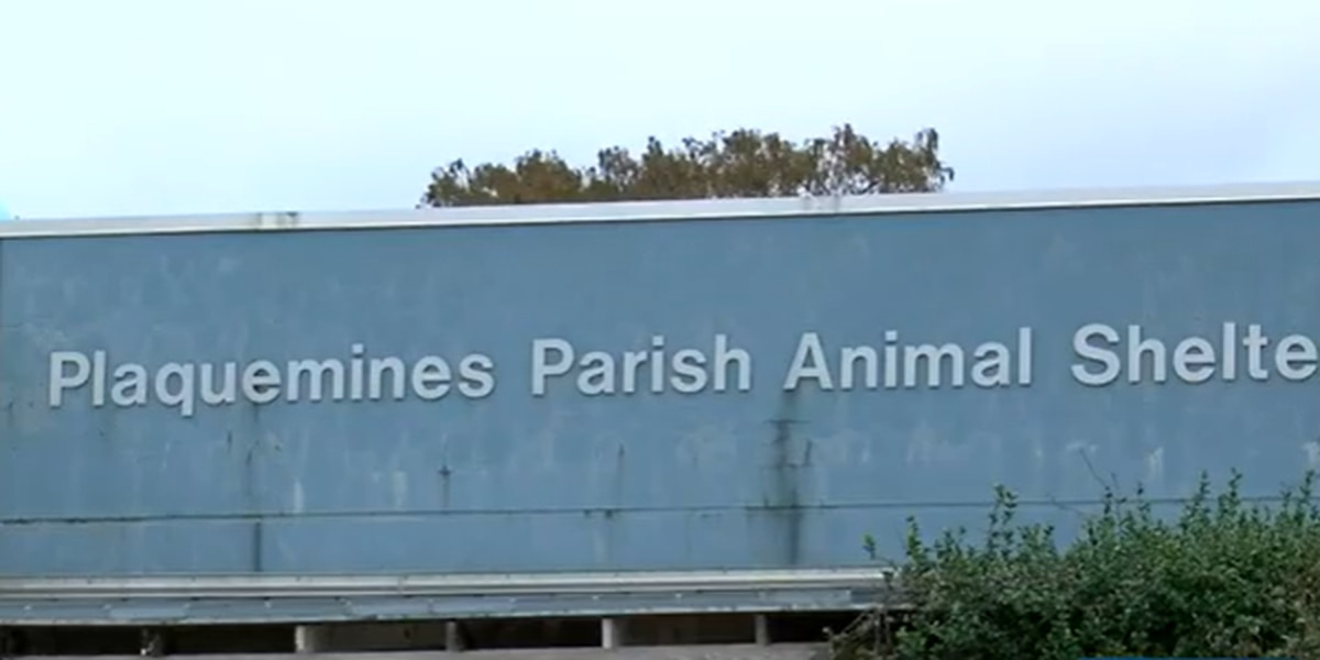 LSPCA takes over Plaquemines Parish animal shelter