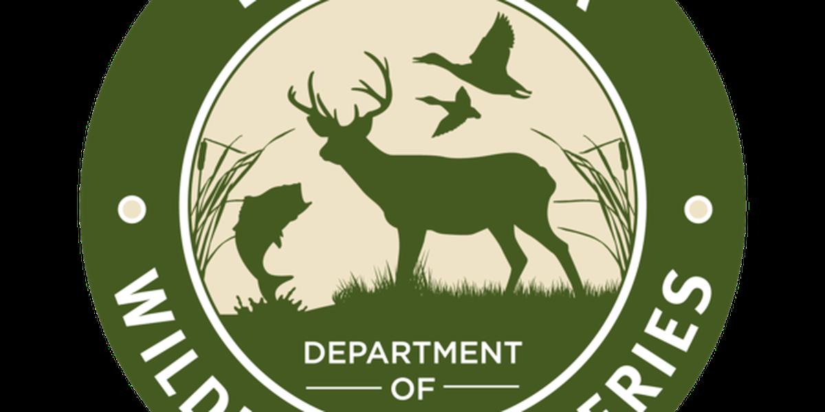Wildlife agents issue citations in alligator hunting investigation