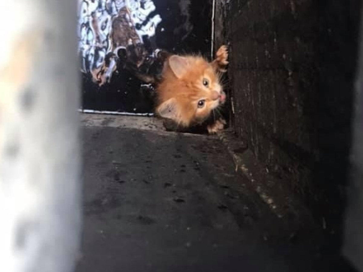 'IT' HAPPENS: Pennywise the kitten rescued from New Orleans storm drain