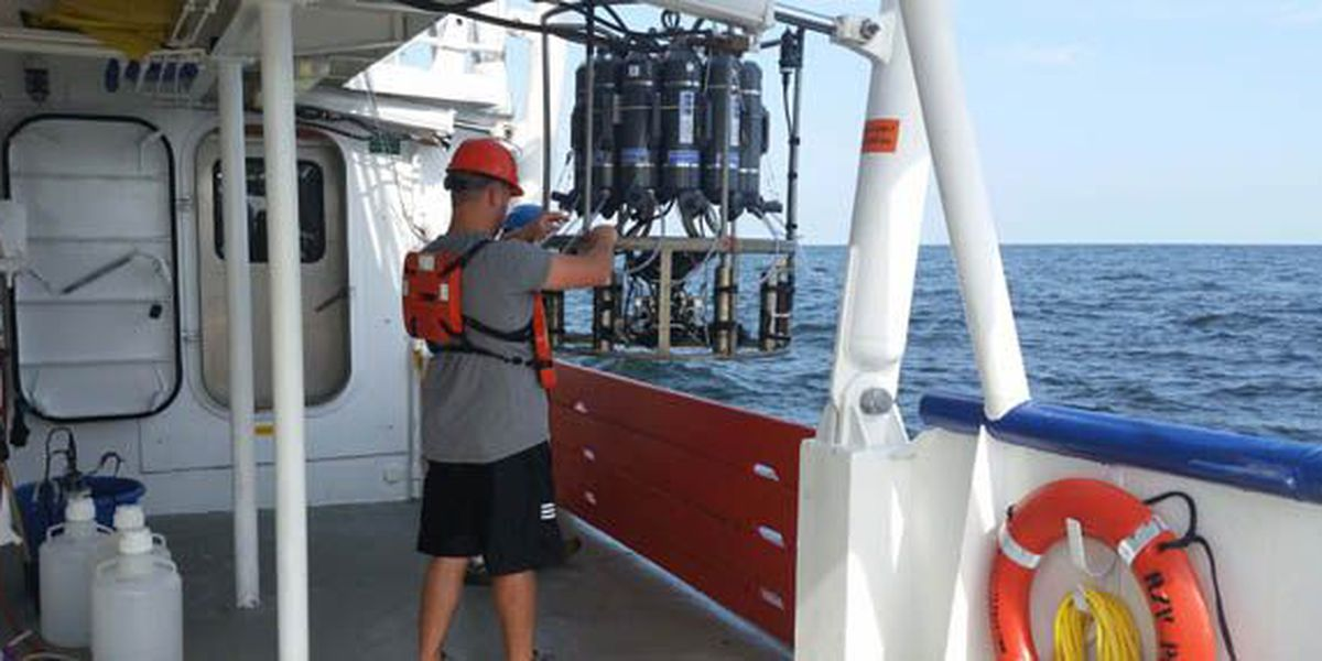 """Scientists forecast an """"average size"""" dead zone in the Gulf of Mexico in 2018"""