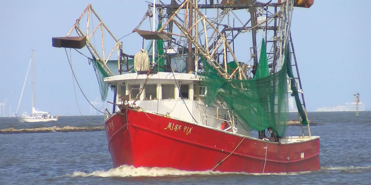 Shrimpers report seeing smaller shrimp this year