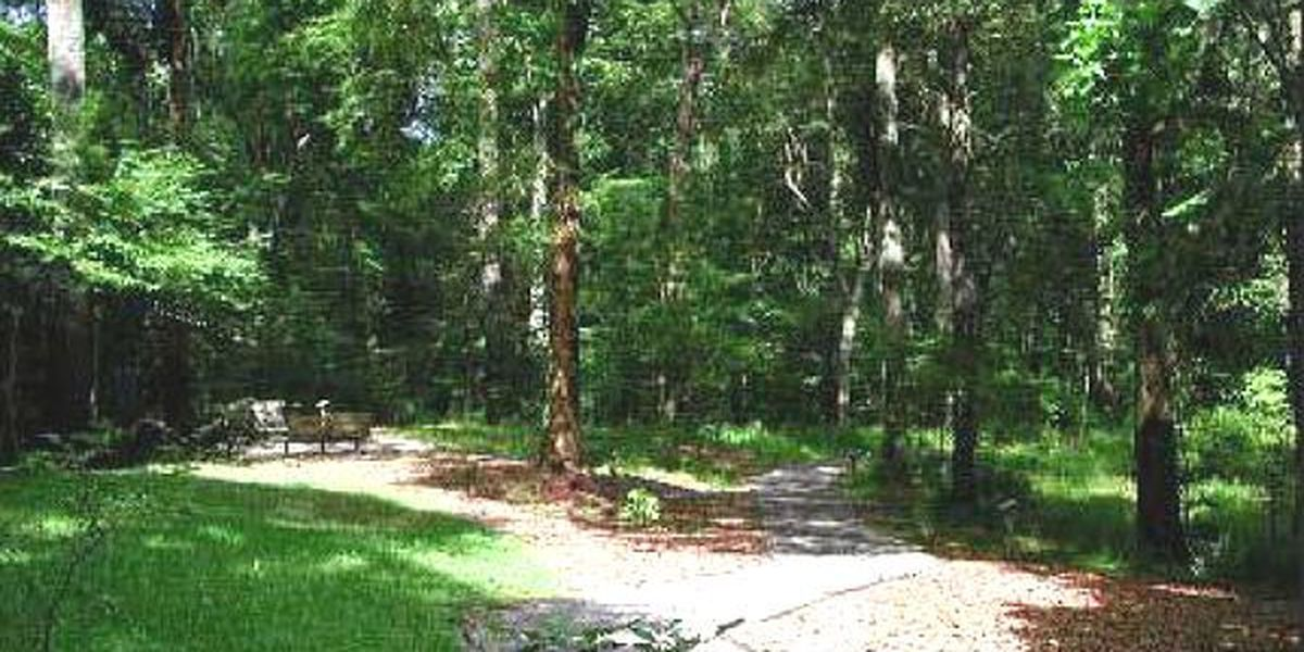 Heart of Louisiana: Louisiana State Arboretum