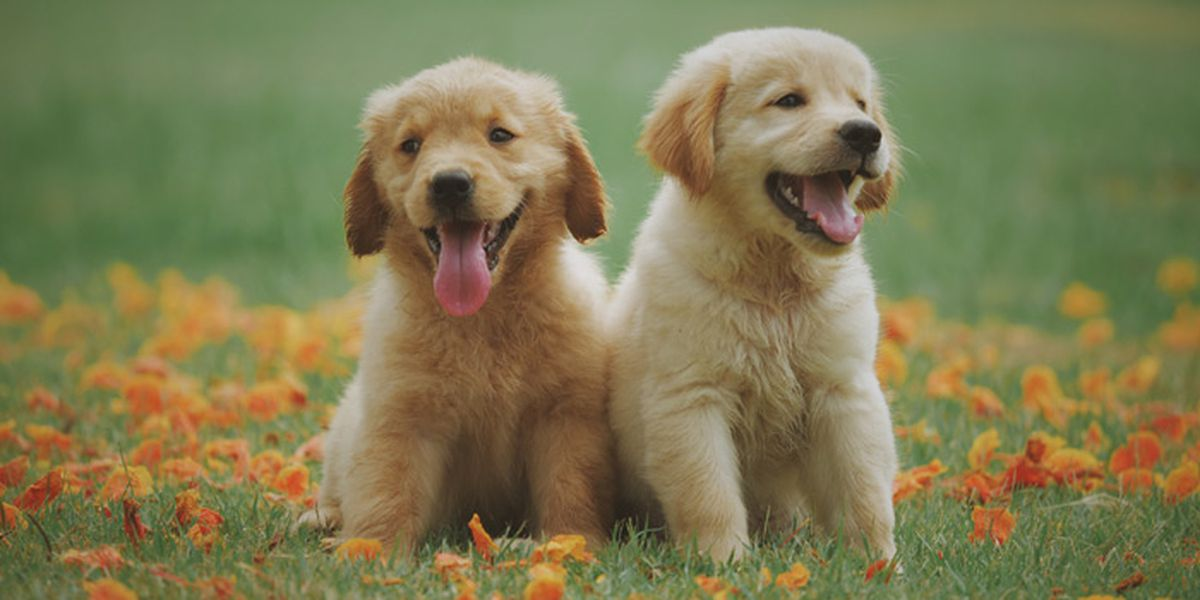 Thinking of getting a puppy for National Puppy Day? That could set you back $1,500
