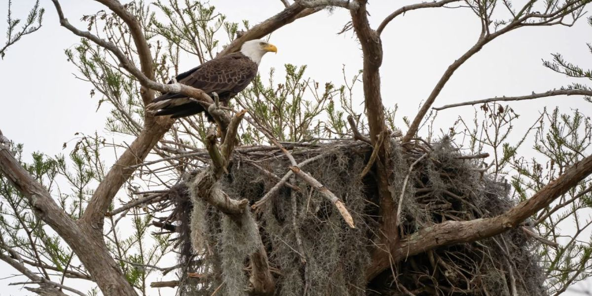 Heart of Louisiana: Bayou Eagles