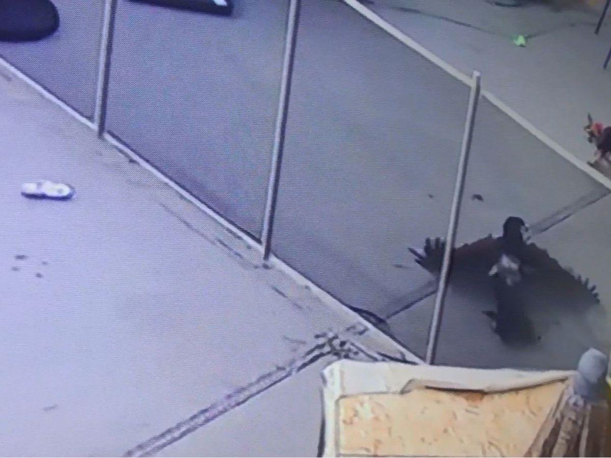 'Get off my dog,' owner yells as bird of prey grabs her Yorkie puppy
