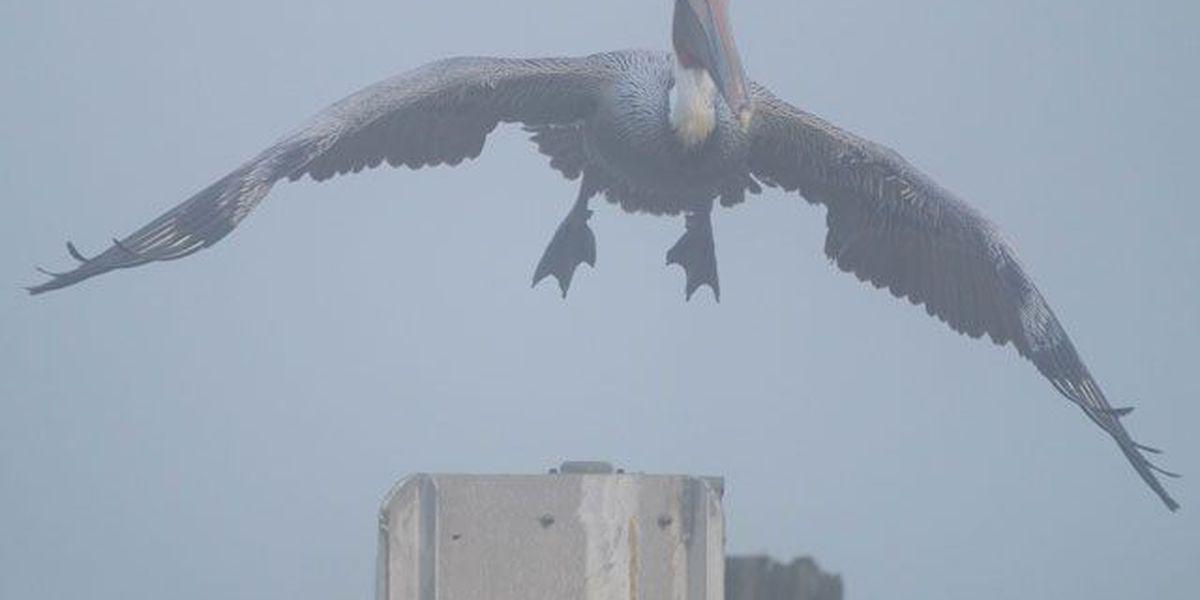 Dense Fog Advisory in effect through 9 a.m.