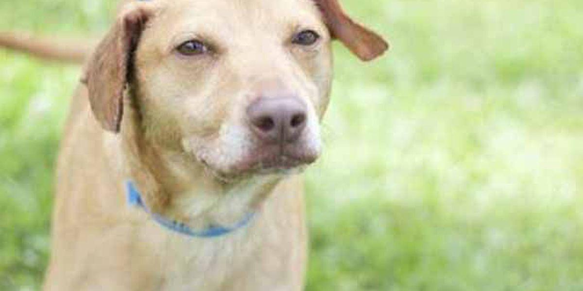 Louisiana SPCA is full, photos of adoptable animals