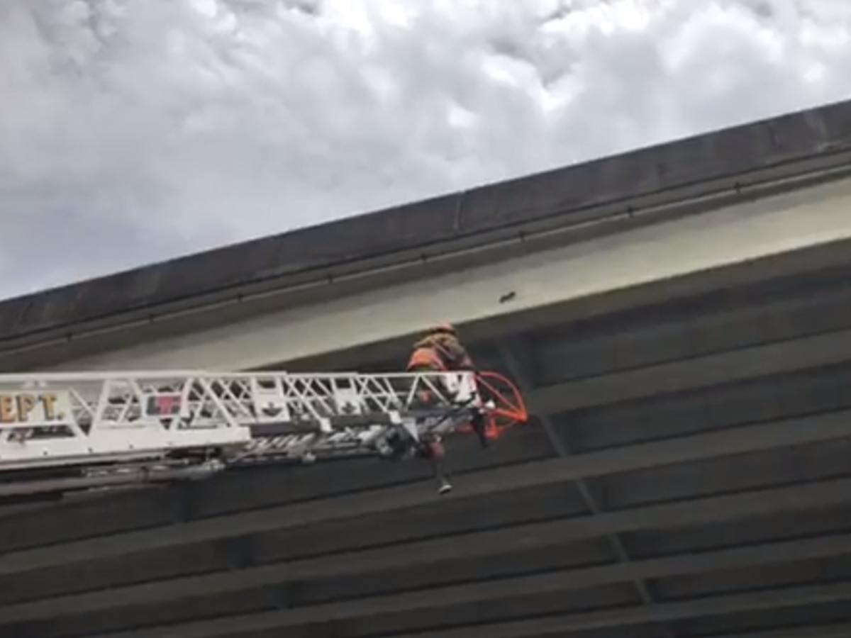 NOFD attempts to rescue kitten from under Crescent City Connection