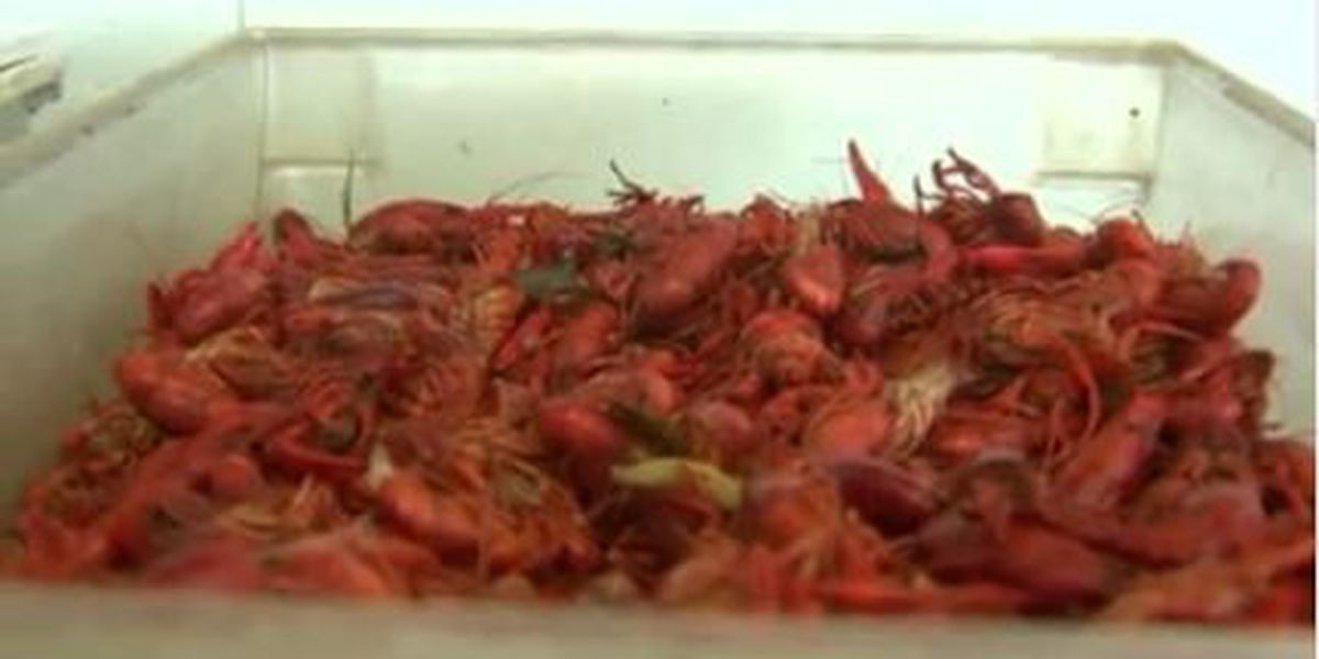 Mild weather presents opportunity for holiday season crawfish boils