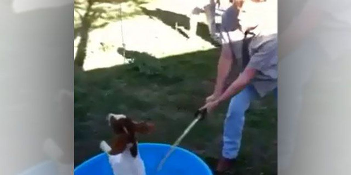 Goat beheaded with machete in plastic swimming pool, LA SPCA offering reward for information