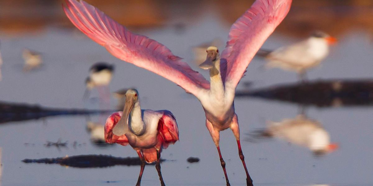 Ain't love grand: Valentines Day in the animal kingdom