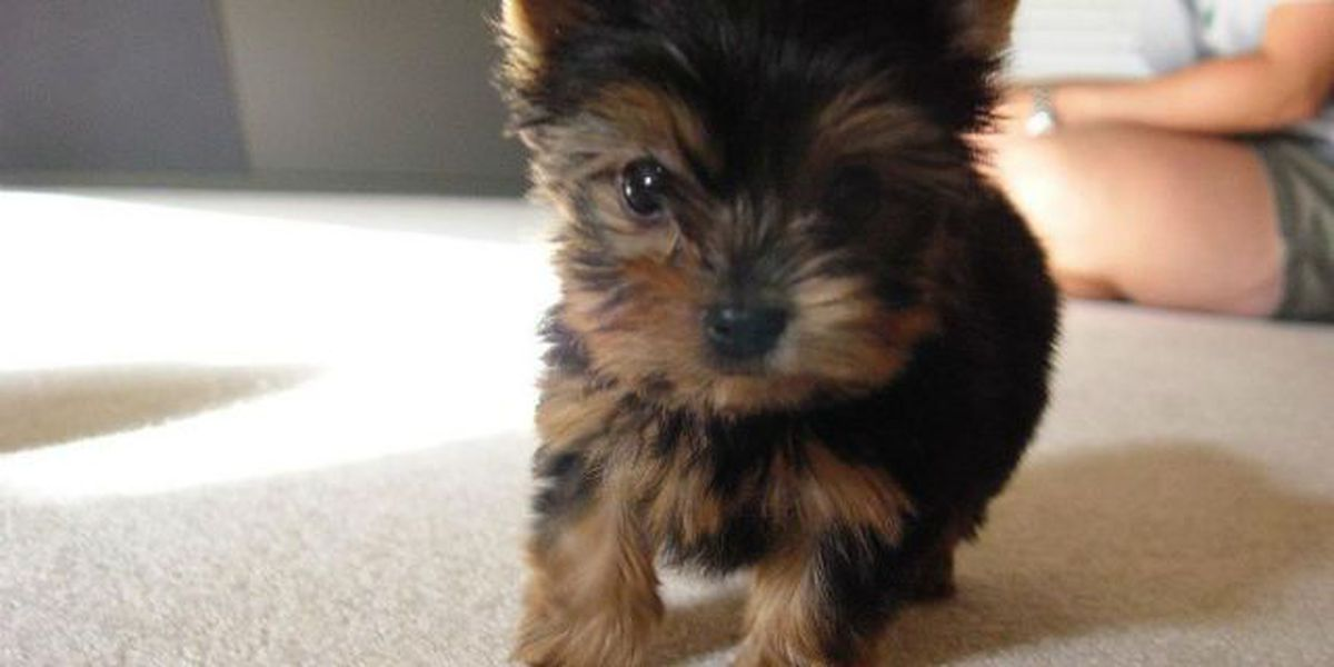 FOX 8 Defenders: North shore couple loses hundreds on pet Yorkie
