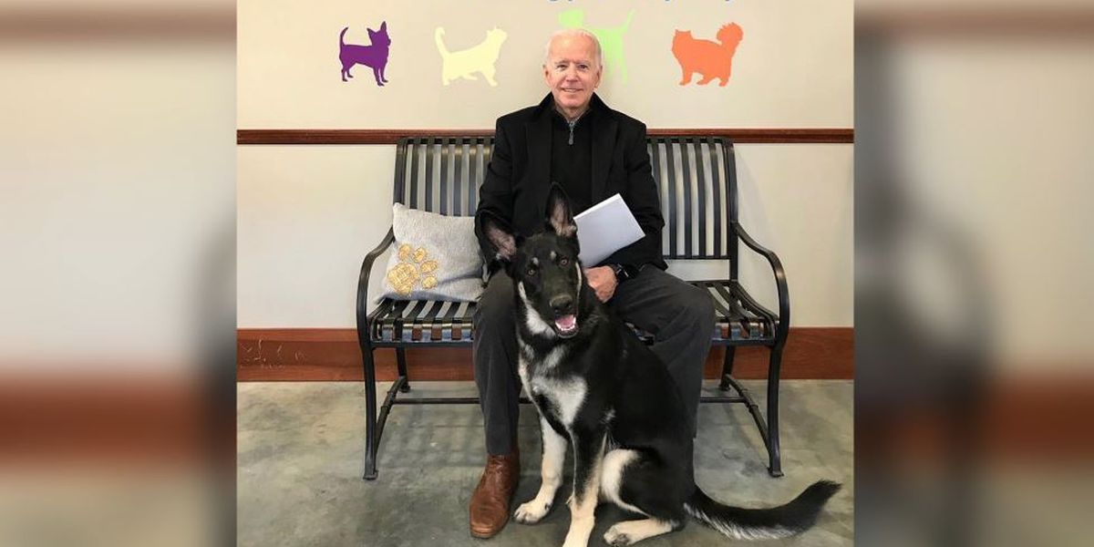 Report: Biden dogs no longer at White House after 'biting incident' with security