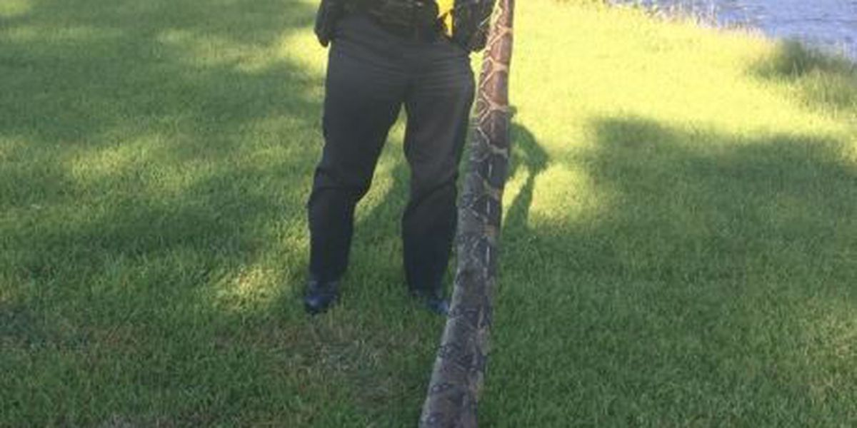 9-foot Boa Constrictor accidentally killed in Plaquemines Parish