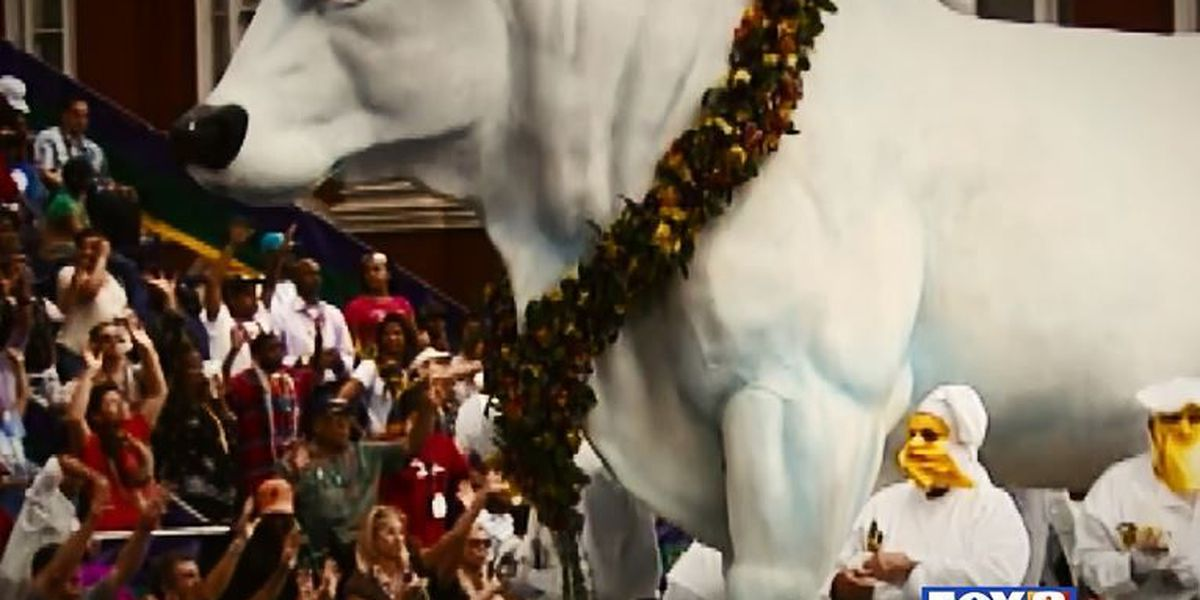 Arthur Hardy's Mardi Gras Moments: Boeuf Gras