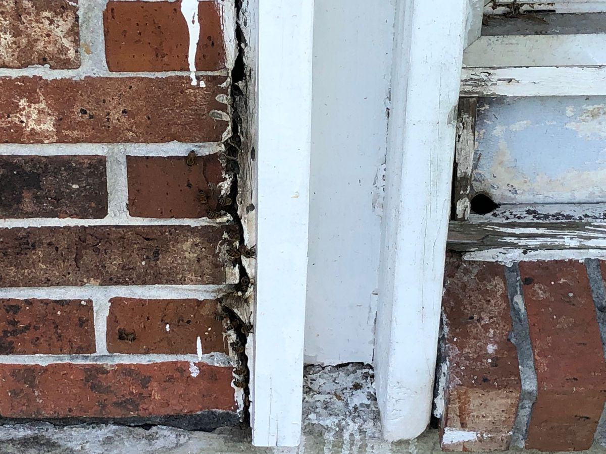 FOX 8 Defenders: Westwego residents concerned over apparent bee infestation