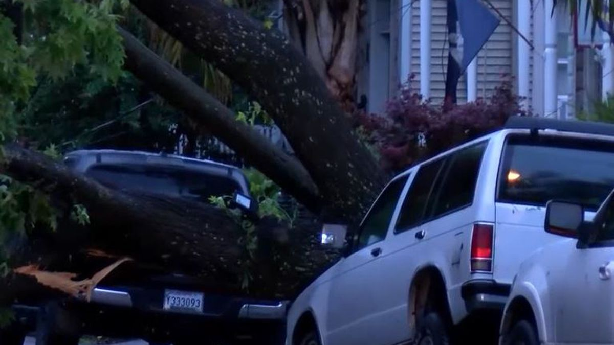 IMAGES: Downed trees, cars damaged from overnight severe weather, possible tornado in Orleans Parish