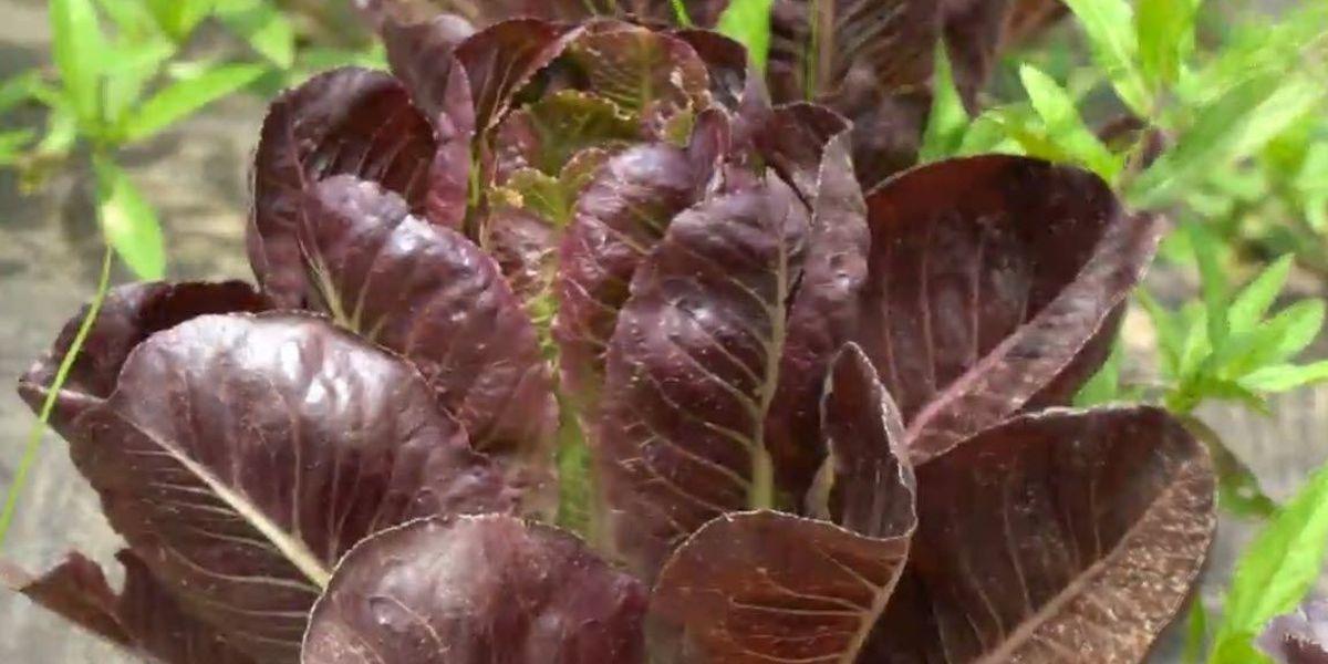 Heart of Louisiana: Organic produce farm near Alexandria