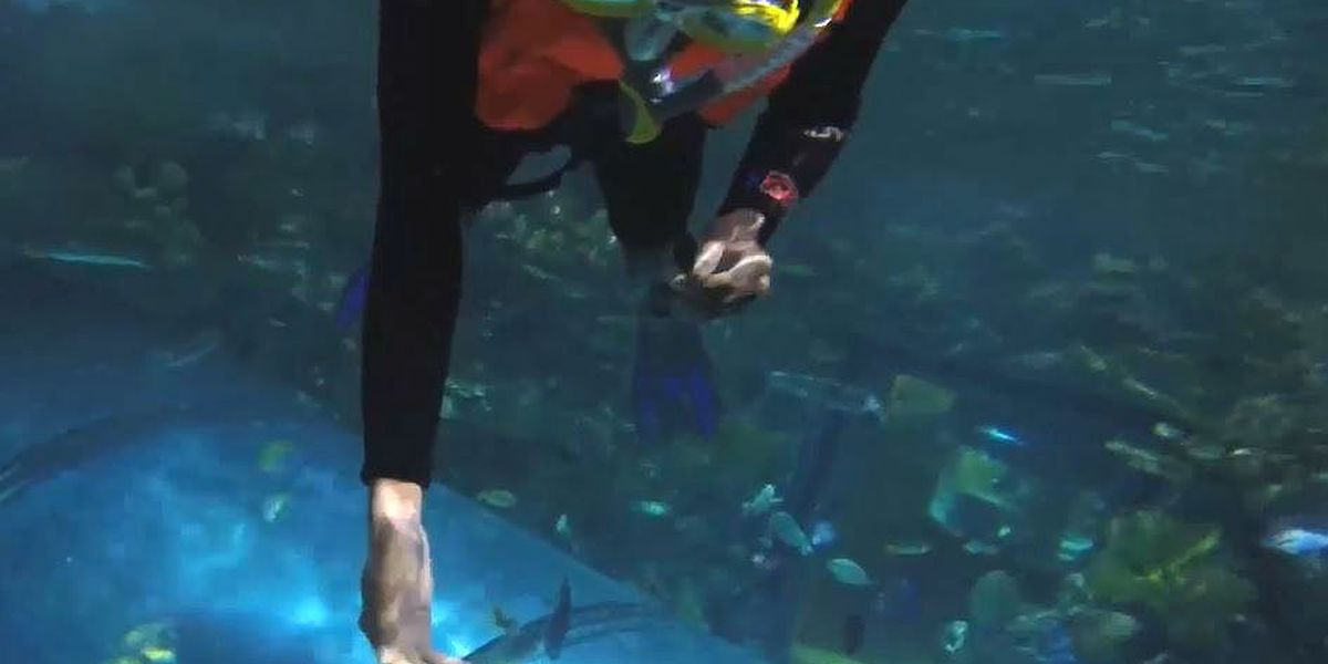 Son of a Saint boys snorkel with the fish at Aquarium of the Americas
