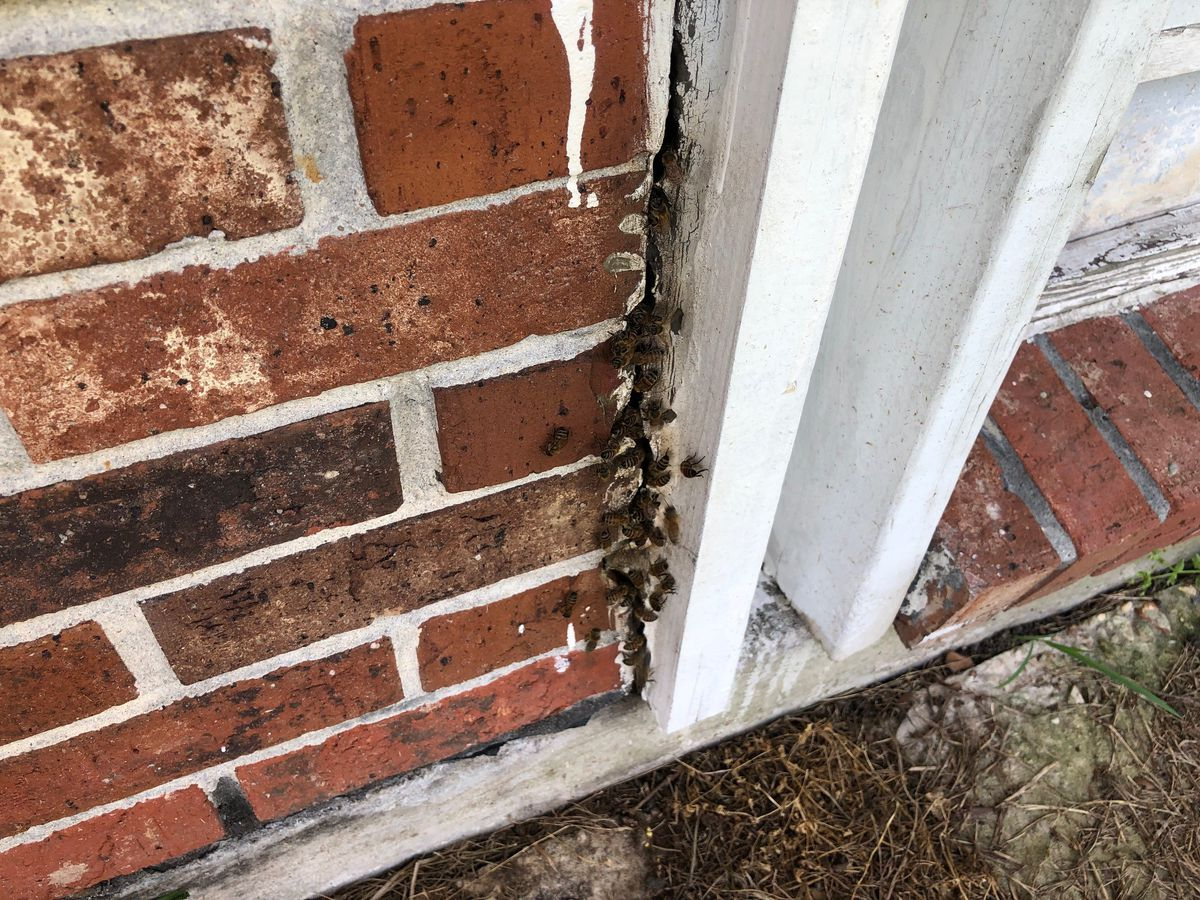 FOX 8 Defenders: Jefferson Parish declares bee-infested home a nuisance