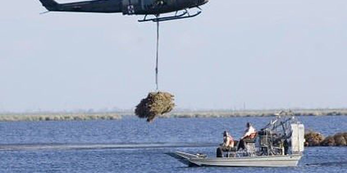 Christmas trees in New Orleans for coastal restoration