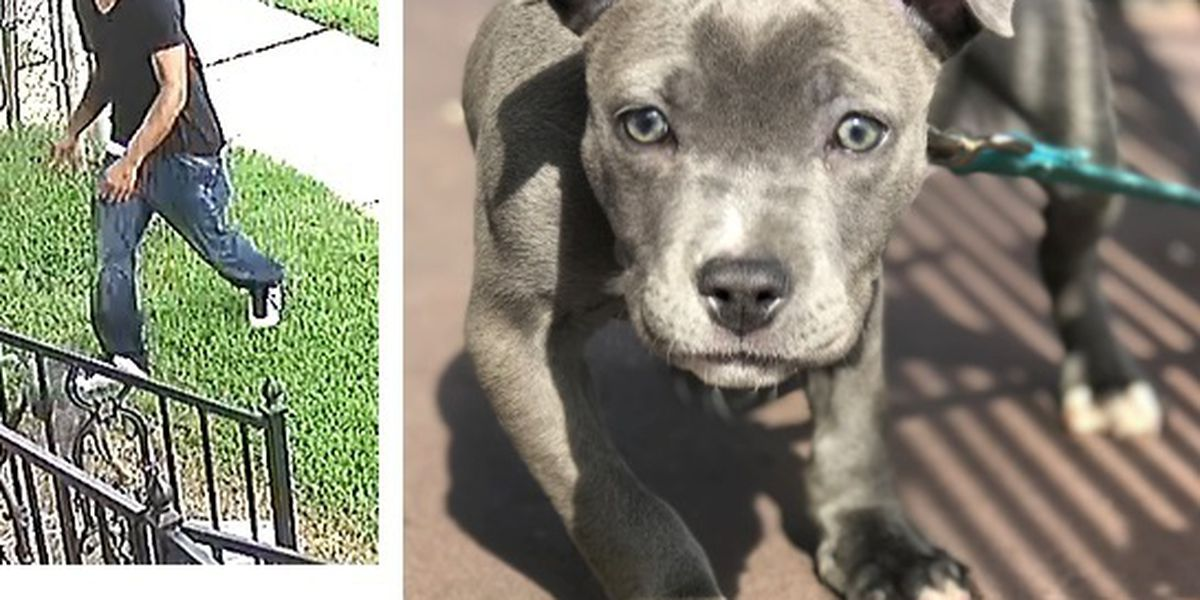 NOPD searching for suspect who stole dog from victim's front yard