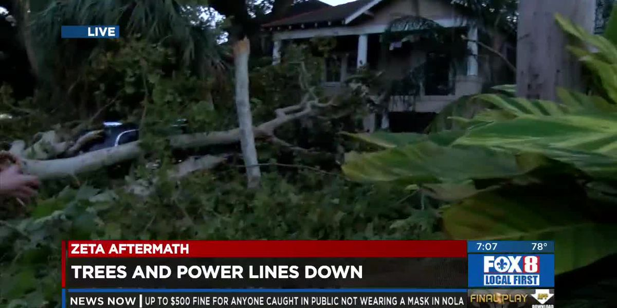 Downed Trees And Powerlines Problem After Zeta