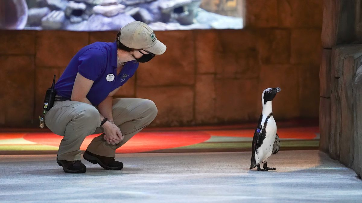 The Audubon Aquarium details safety rules on the eve of reopening