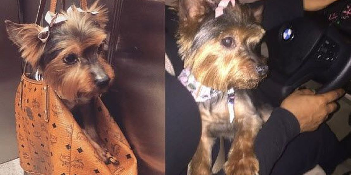 Police: Woman steals dog from Uptown neighborhood, gives it away