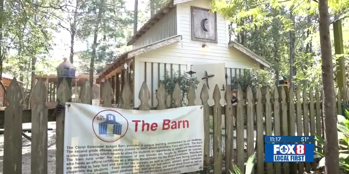 The Barn: Injured animals find a home in an unlikely place