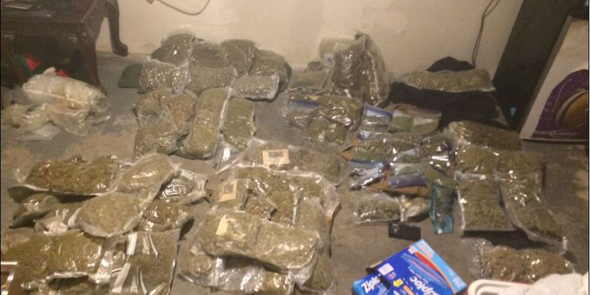 Deputies seize more than 60 lbs. of marijuana from a home